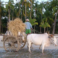 Beach Life Myanmar