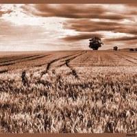 Magyar mezőgazdaság a rendszerváltás után
