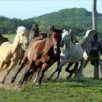 Ady: Új s új lovat (mindekinek, de főleg f.m.j-ének)