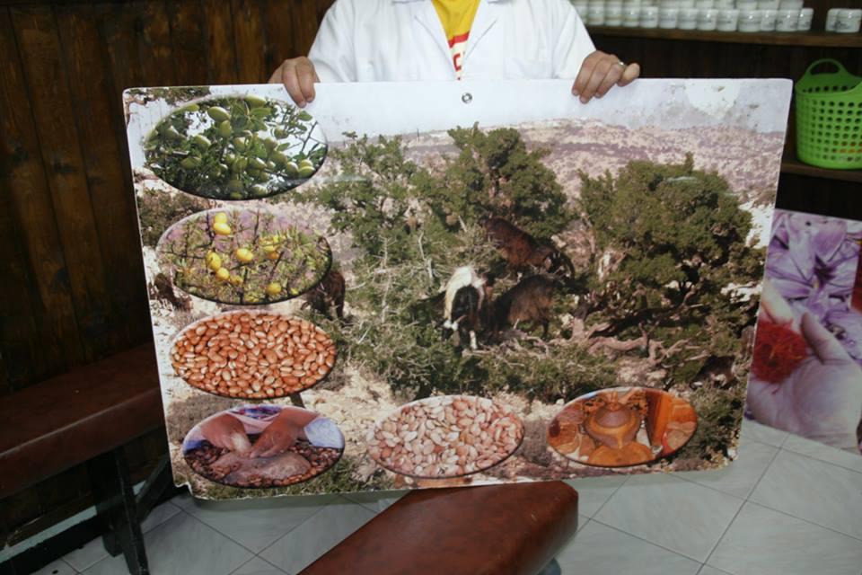 argánfa és termése, amiből a számos dolog alapanyaga, az argánolaj készül