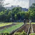 COP15 előadások: Városi kertészkedés Kubában