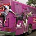 Kutyaeledel reklám