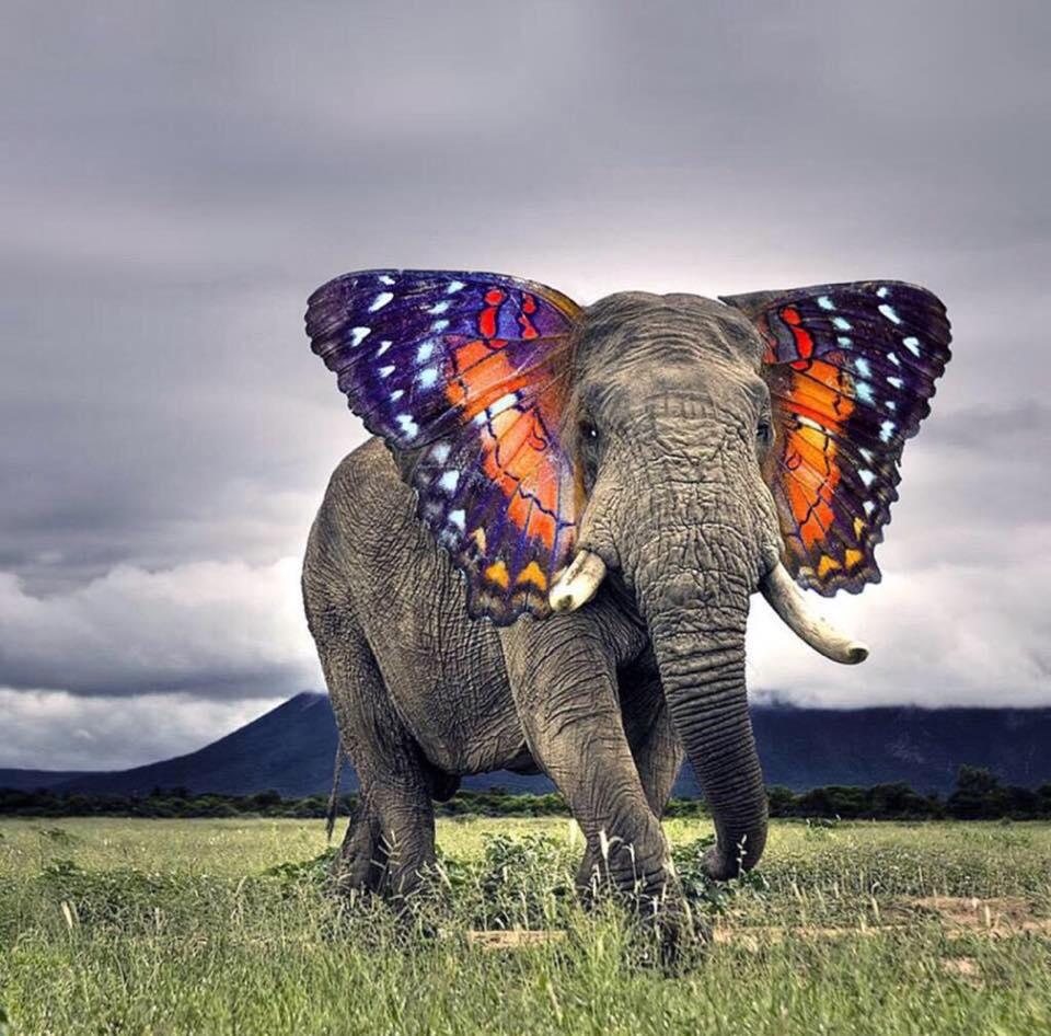 elefant-az-elefant.jpg