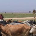 A természetvédelmi konfliktusok kezeléséről