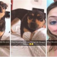 Te rúgtál már be annyira, hogy hazavittél egy idegen kutyát?