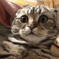 A macskám baromi vicces fejeket tud vágni