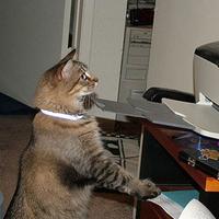 Macskák a használati tárgyak ellen