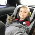 A kisfiú karácsonyi kívánsága csak annyi volt, hogy visszakapja a tűzvészben elveszett cicáit