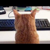 Cukiság: Macskák a dolgozószobában