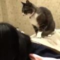 A masszőr macska munkában