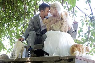 A kanadai pár 1100 macska társaságában mondta ki a boldogító igent