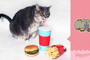 Így használd ki, ha a macskád hasonlít egy emojira