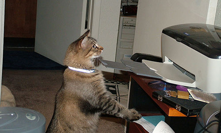cat-and-printer-2.jpg