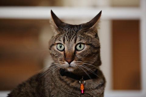 cats-blog480.jpg