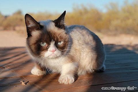grumpy-cat-2.jpg