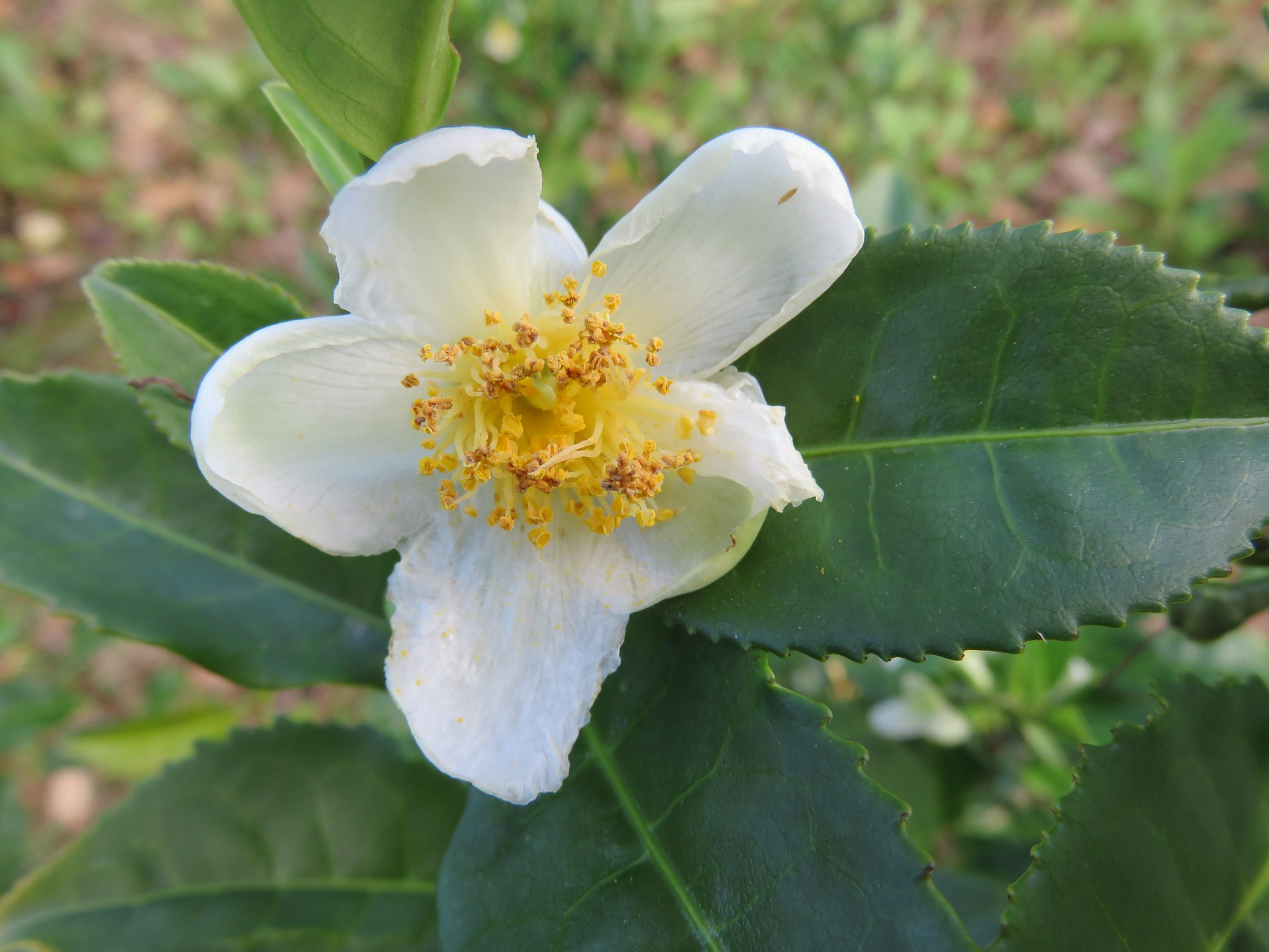 blossom-549648_1920.jpg