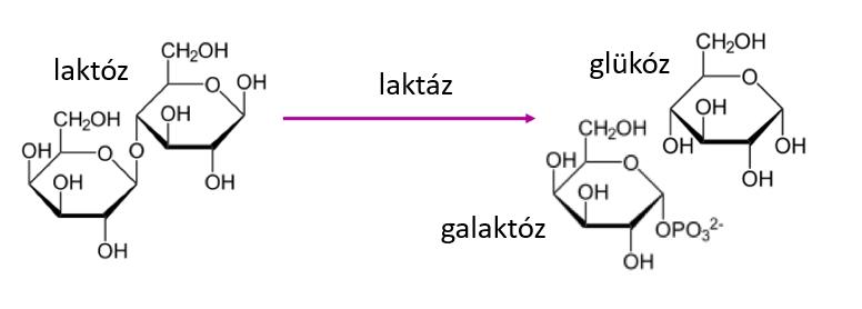 laktoz.PNG