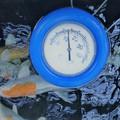 Halaink etetése a hőmérséklet csökkenésével