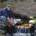 Biztonságos vízcsere a kerti tóban