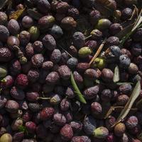 Így megy a nagy olívaolaj átverés.