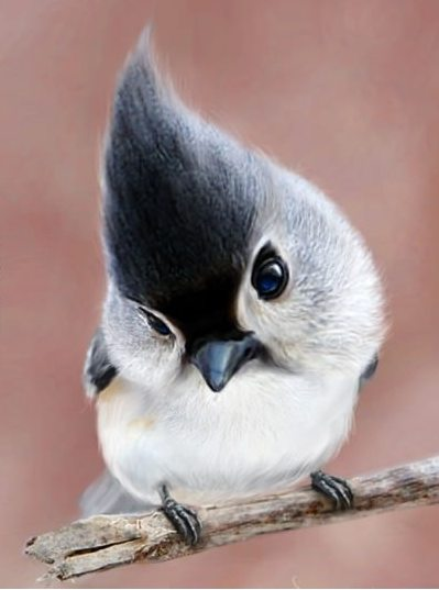 sparrow-with-hairstyle.jpg