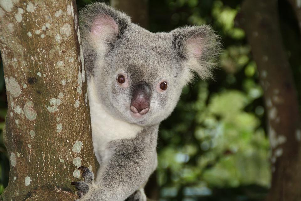 australia-1068578_960_720.jpg