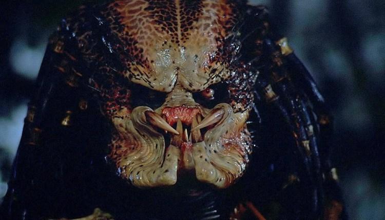 predator1.jpeg