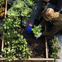 Így építsd újjá a kertedet és hozd ki belőle a legtöbbet!