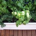 Ismerd meg a fűszernövényeket és ízesítsd velük ételeidet!