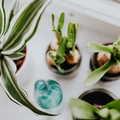Beltéri növény útmutató kezdőknek