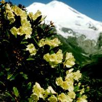 Kaukázus - Túrabeszámoló