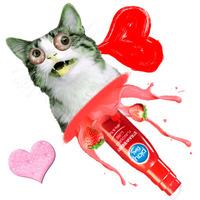 Valentin napi macskasíkosító