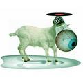 A bárányszüret