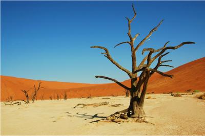 sivatag_namibia_furureclick.png