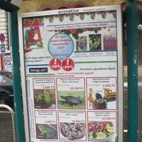Auchan antiplakát kampány