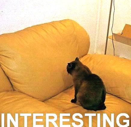 cat-interesting.jpg