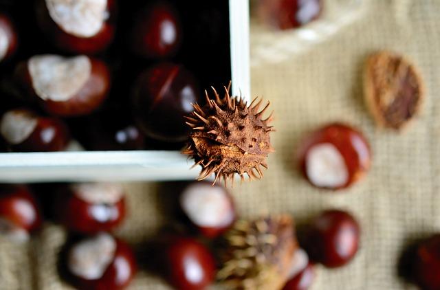 chestnut-3693483_640.jpg