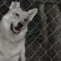 Fehér farkas és más történetek - Tóth Krisztina írásai filmeken