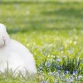 10+1 érdekesség a Húsvétról, amiről lehet még Te sem hallottál!