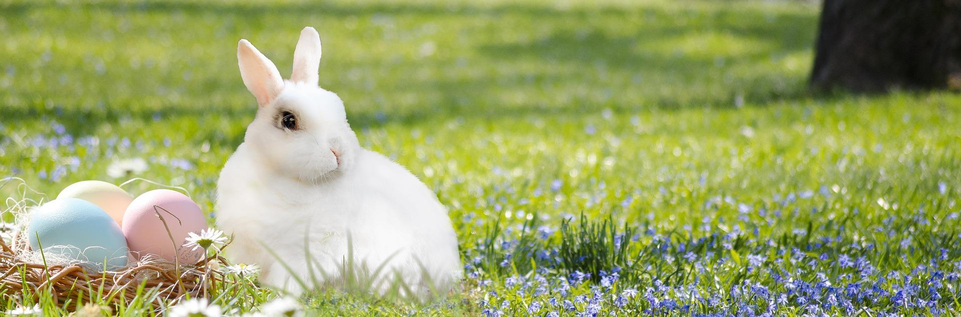easter-bunny-3201433_1920.jpg