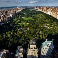A pénz tényleg fán terem, és New York City vizualizálta is ezt