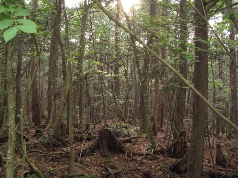 Aokigahara, az 'öngyilkosok erdeje'