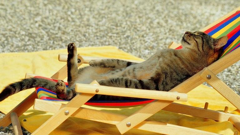 cat-holiday-hd-cat-wallpapers-kittens-widescreen-pussycats-high-resolution-pet-photos-animal-love-cat-desktop-images-cat-wallpapers-for-mac-windows-wallpapers-of-cats-1805x1015-768x432.jpg