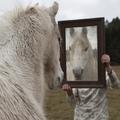póni a tükörben