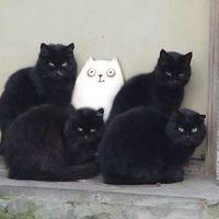 7 macska