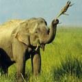Elefáni és a gyík