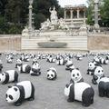 A pandák elfoglalták Rómát