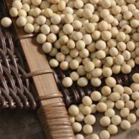 Khong (콩)
