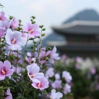 Korea nemzeti szimbólumai