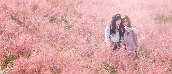 1_nanjido-pink-muhly-_700x301.jpg